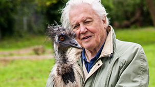 David Attenborough's Natural Curiosities - Series 4: 3. Extreme Babies