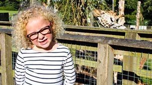 My First - Series 2: 14. Safari Park