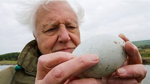 Natural World - 2018-2019: 1. Attenborough's Wonder Of Eggs