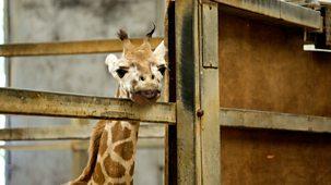 The Zoo - Series 2: 9. Who's Afraid Of The Big Bad Zoo