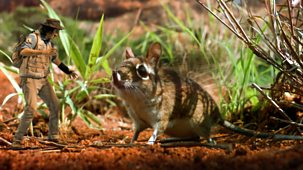 Andy's Safari Adventures - Series 1: 11. Andy And The Elephant Shrew