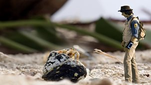 Andy's Safari Adventures - Series 1: 13. Andy And The Hermit Crab