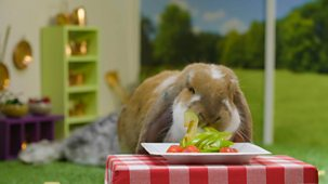 Animal Tv - Series 1: 10. Baking With Other Vegetables