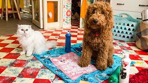 Waffle The Wonder Dog - Series 2: 10. Waffle's Wonderful Art