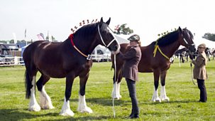 The Farmers' Country Showdown - Series 2 30-minute Versions: 7. Shire Horses