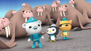 Octonauts - Series 1 - The Walrus Chief
