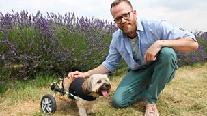 Ferne And Rory's Vet Tales - Series 2: 1. Otto The Dog