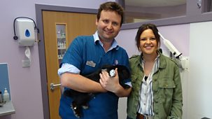 Ferne And Rory's Vet Tales - Series 2: 11. Lemmy The Rabbit