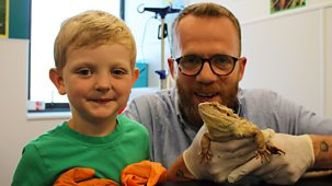 Ferne And Rory's Vet Tales - Series 2: 12. Beardy The Bearded Dragon