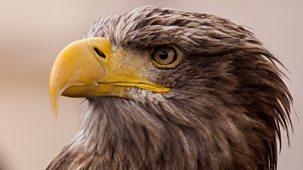Turtle, Eagle, Cheetah: A Slow Odyssey - An Eagle's Flight
