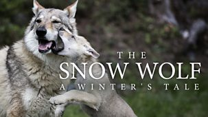 The Snow Wolf: A Winter's Tale - Episode 09-01-2019