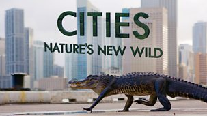 Cities: Nature's New Wild - Series 1: 1. Residents