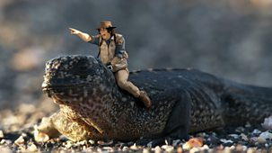 Andy's Safari Adventures - Series 1: 25. Andy And The Marine Iguanas