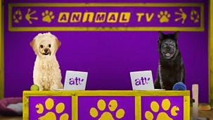 Animal Tv - Series 1: 11. Frisky Come Dancing