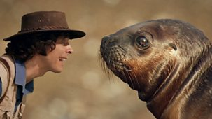 Andy's Safari Adventures - Series 1: 28. Andy And The Sea Lions