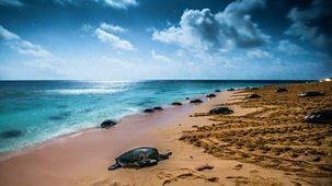 Australia: Earth's Magical Kingdom - Series 1: 2. Ocean