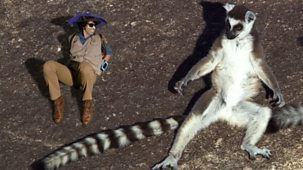 Andy's Safari Adventures - Series 1: 34. Andy And The Ring-tailed Lemurs