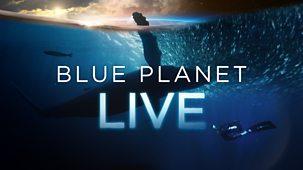 Blue Planet Live - Series 1: Episode 1