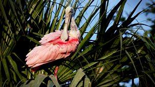 Natural World - 2019-2020: 1. Florida: America's Animal Paradise