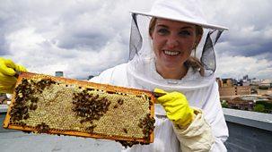 Do You Know? - Series 3: 13. Beehive And Mug
