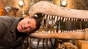 Deadly Dinosaurs With Steve Backshall - Series 1: Episode 1