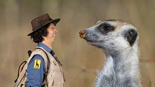 Andy's Safari Adventures - Series 1: 2. Andy And The Meerkats