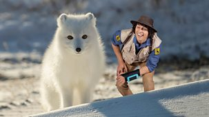 Andy's Safari Adventures - Series 1: 4. Andy And The Arctic Fox