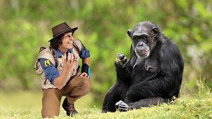 Andy's Safari Adventures - Series 1: 5. Andy And The Chimps