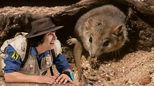 Andy's Safari Adventures - Series 1: 6. Andy And The Grasshopper Mouse