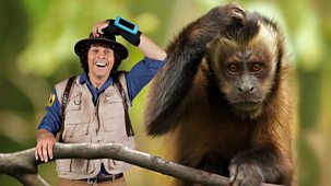 Andy's Safari Adventures - Series 1: 9. Andy And The Capuchins