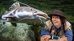 Andy's Safari Adventures - Series 1: 14. Andy And The Catfish