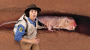 Andy's Safari Adventures - Series 1: 15. Andy And The Naked Mole Rat