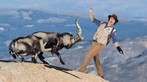 Andy's Safari Adventures - Series 1: 16. Andy And The Mountain Goats