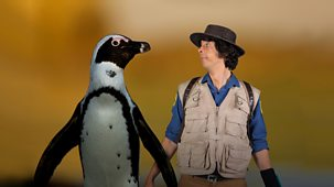Andy's Safari Adventures - Series 1: 17. Andy And The African Penguins
