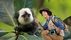 Andy's Safari Adventures - Series 1: 19. Andy And The Marmosets