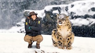 Andy's Safari Adventures - Series 1: 21. Andy And The Snow Leopard