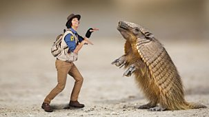 Andy's Safari Adventures - Series 1: 26. Andy And The Armadillo
