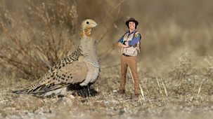 Andy's Safari Adventures - Series 1: 27. Andy And The Sand Grouse
