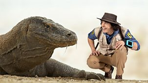 Andy's Safari Adventures - Series 1: 29. Andy And The Komodo Dragon
