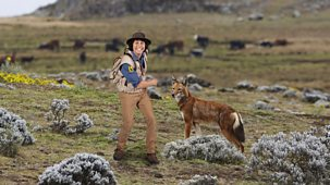 Andy's Safari Adventures - Series 1: 30. Andy And The Ethiopian Wolves