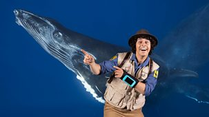 Andy's Safari Adventures - Series 1: 31. Andy And The Humpback Whale