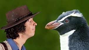 Andy's Safari Adventures - Series 1: 33. Andy And The Snare's Penguins