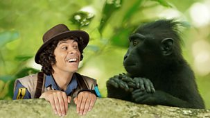 Andy's Safari Adventures - Series 1: 36. Andy And The Black-crested Macaques