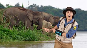 Andy's Safari Adventures - Series 1: 40. Andy And The Asian Elephants