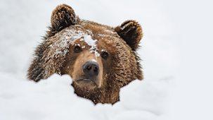 Natural World - 2019-2020: Meet The Bears
