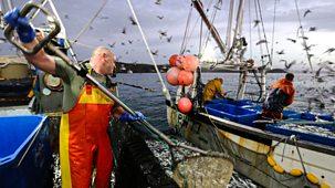 Cornwall: This Fishing Life - Series 1: Episode 1