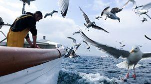 Cornwall: This Fishing Life - Series 1: Episode 6