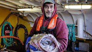 Cornwall: This Fishing Life - Series 1: Episode 4