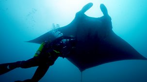 Deadly 60 - Series 4: 6. Ecuador Oceans