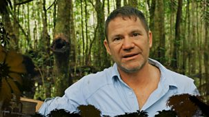 Deadly 60 - Series 4 - Shorts: 4. Palm Oil